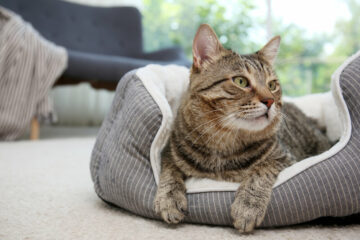 6x leuke kattenmanden voor in huis