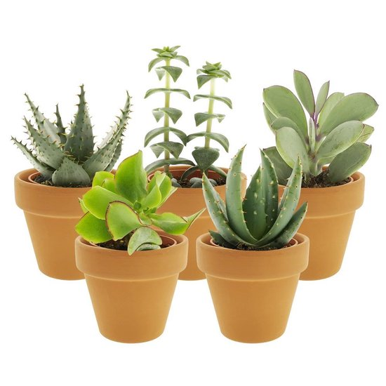 Desertworld Mini Vetplantjes