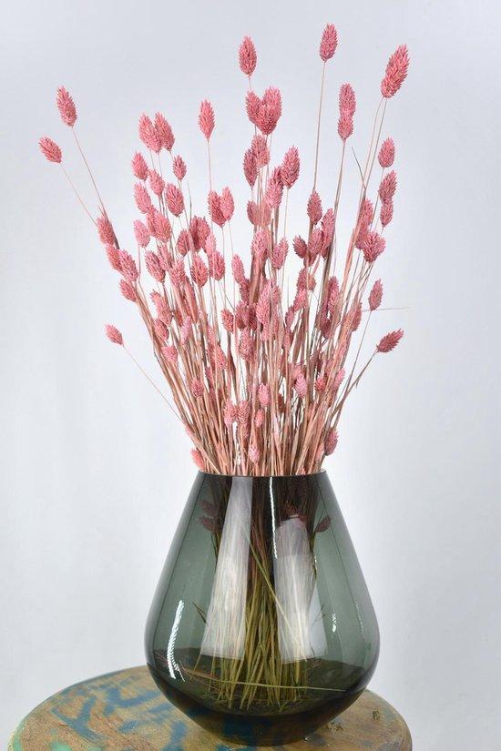 Droogbloemen Phalaris licht roze