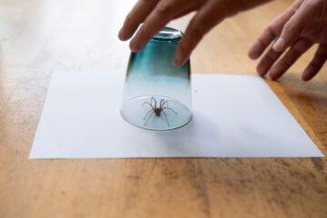 Last van spinnen