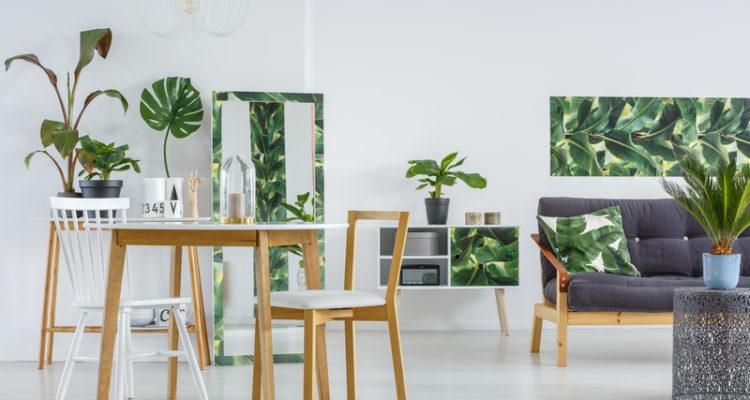 bananenplant als kamerplant