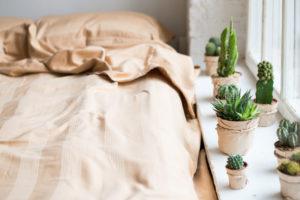 cactus in huis