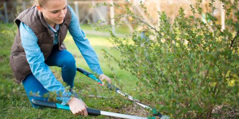 de tuin klaar maken voor de zomer