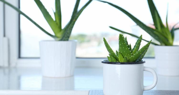 planten voor slaapkamer