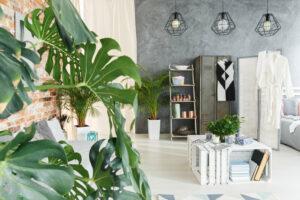 gezonder binnenklimaat met planten