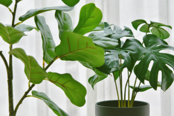 grote planten in huis