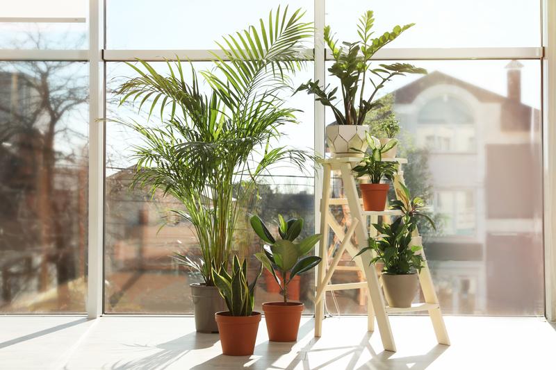 planten gaat kopen