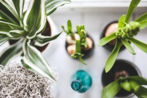 kamerplanten zonder onderhoud
