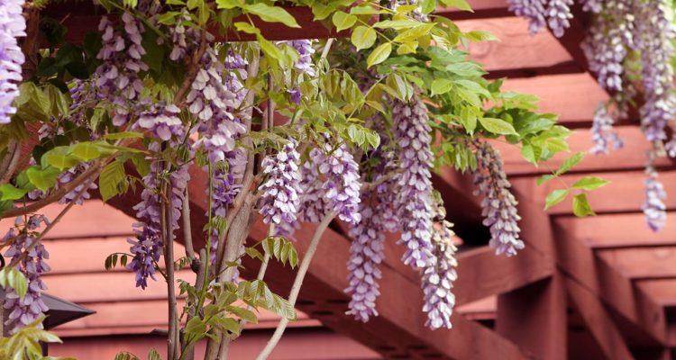 pergola maken voor druiven