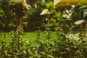 sfeervolle tuin